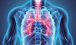 Immune Plant Medicine Part 1 - Understanding Detoxification