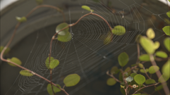 Spiderweb copy.png