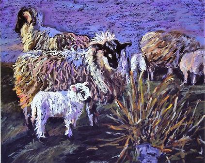 Best-S-Oil Pastel-Shetland Sheep-SOLD Sc