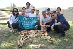 18 在约翰内斯堡大猫公园,从野外救回的小猎豹孤儿在人类的照料下安全长大,却似乎