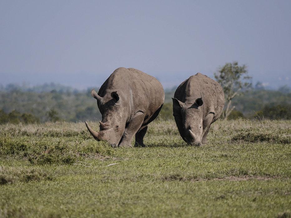 rhino-2675889.jpg