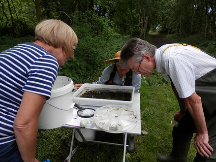 Riverfly Surveying Hinderclay Fen.JPG