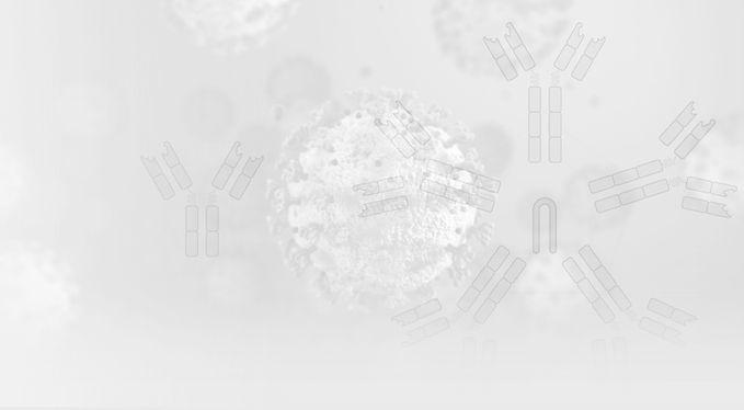 homepage_main_homepage-covid-antibody-bo