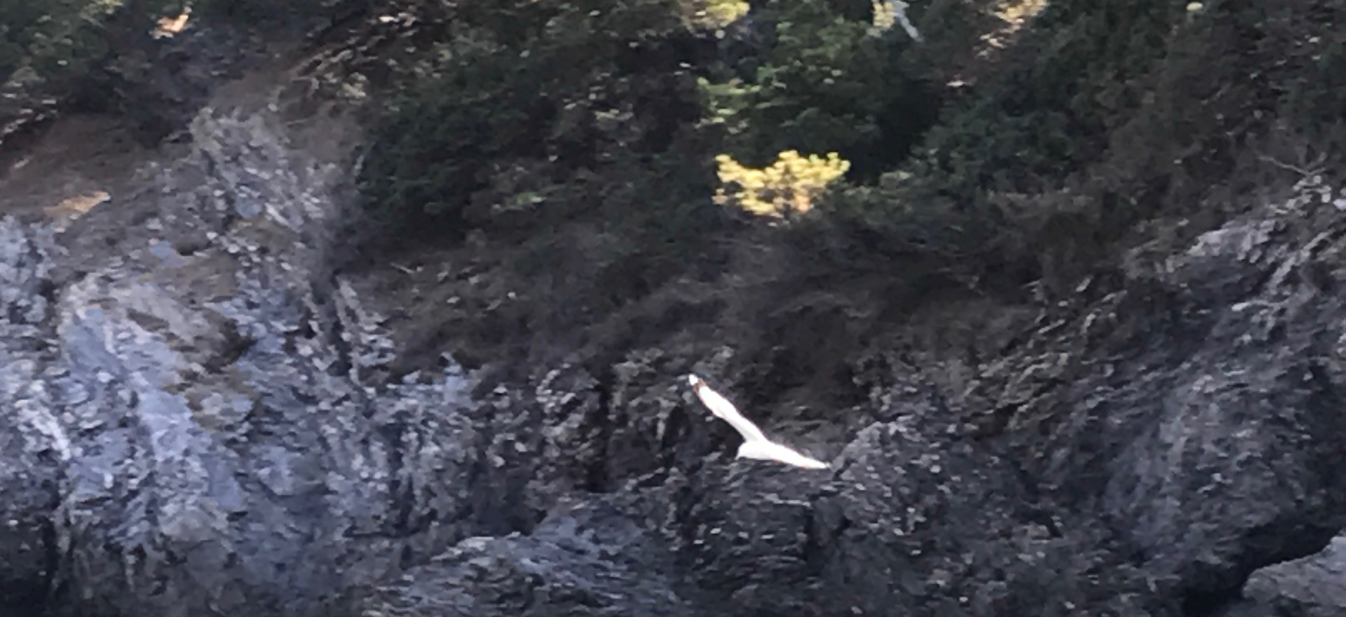 Oiseau, vole
