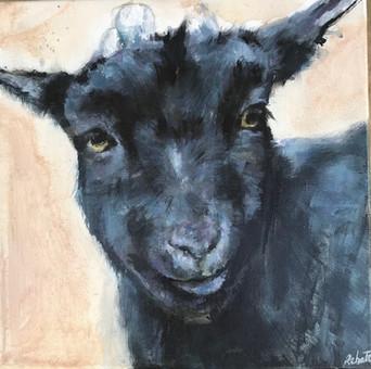 """Série """"je veux vivre"""", Cahuet, la chèvre."""