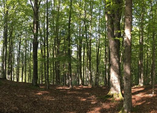 Gestione forestale e cambiamenti climatici