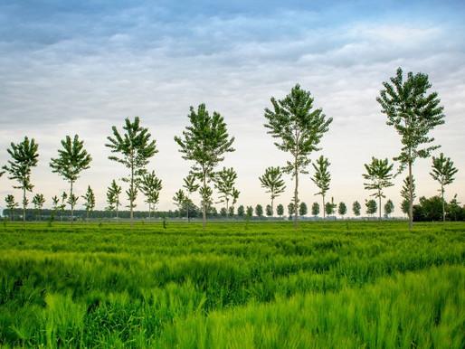 Agroforestry: passato o futuro?
