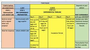 CAM Assay Timeline.png