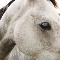Dallas Animal Portrait Photography
