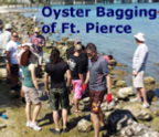 oyster bagging.png