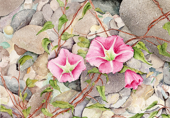 enlarged print: beach morning glory