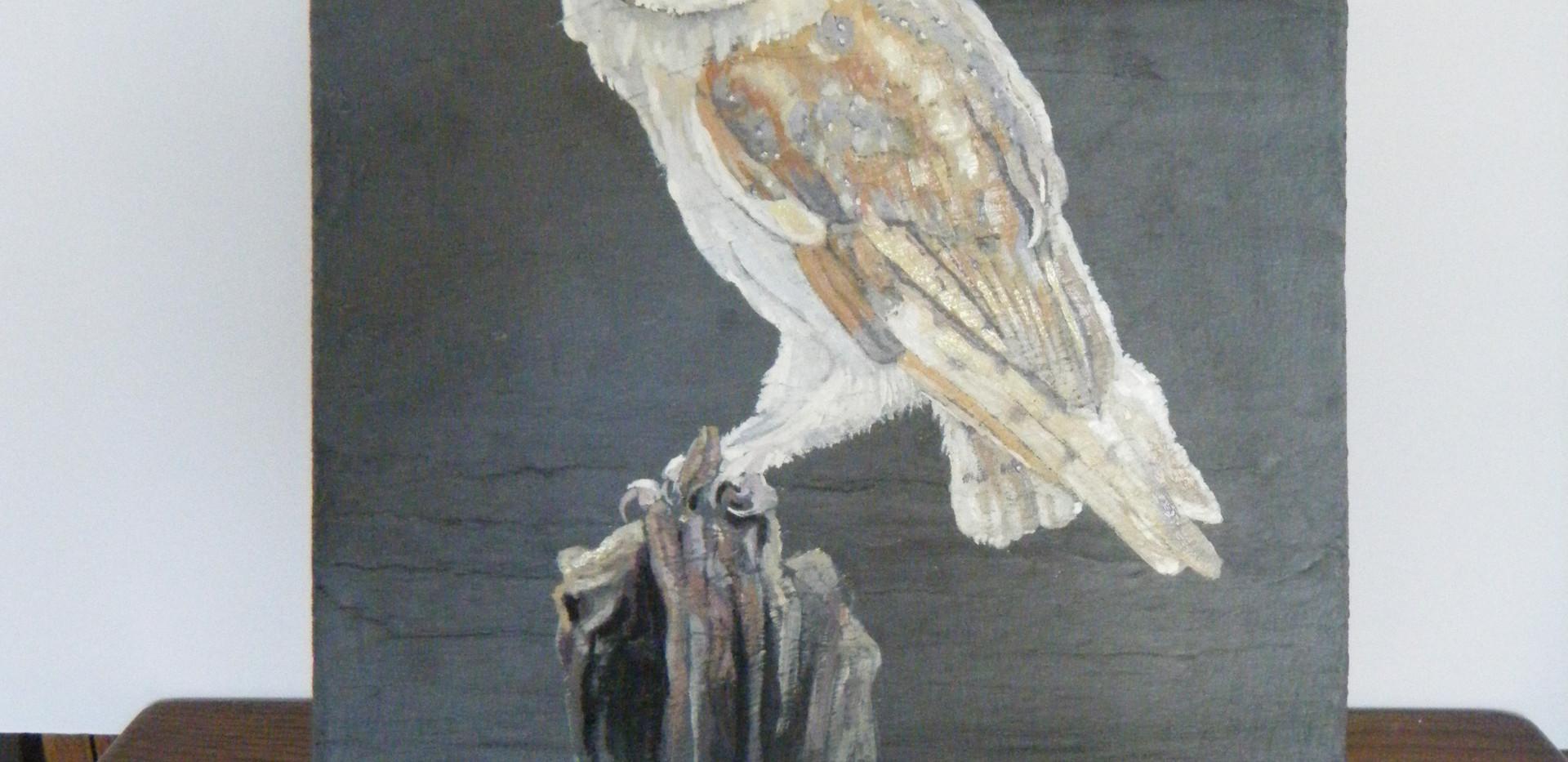 Medium picture of Barn owl