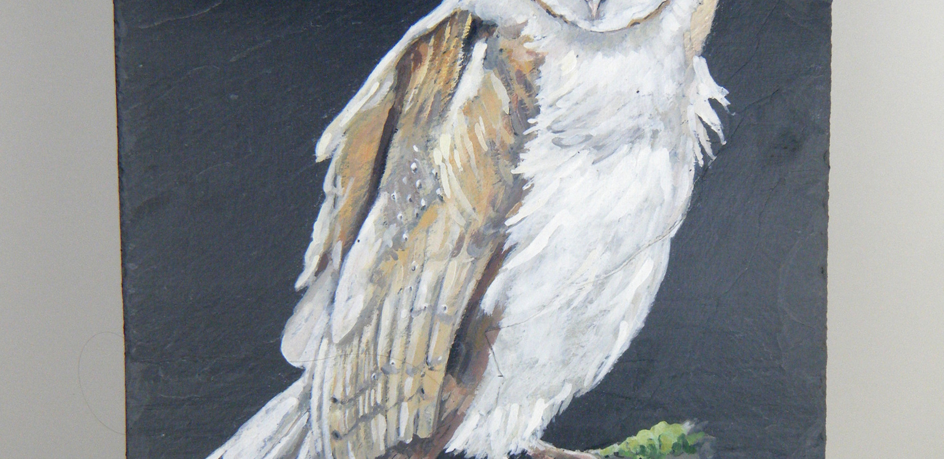 Large picture of Barn owl