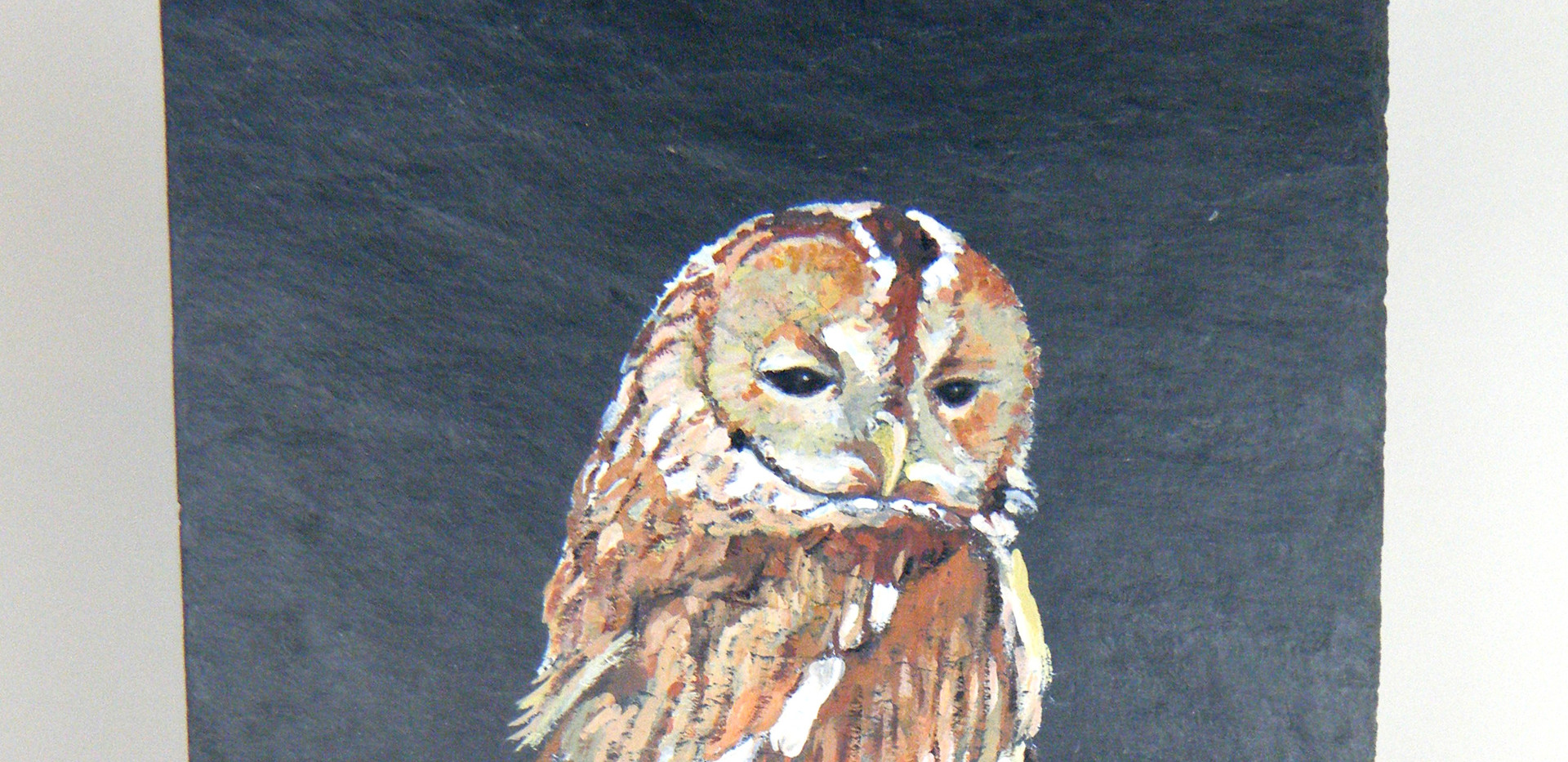 Large picture of Tawny owl