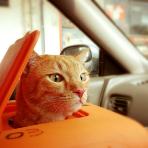 5 Tips you should know before traveling with your cat
