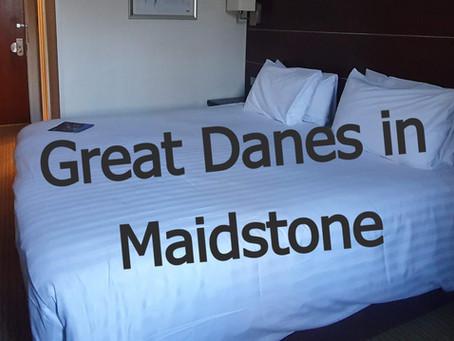 Mercure Hotel - Great Danes in Maidstone