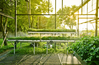 植床架上的野花草毯廊
