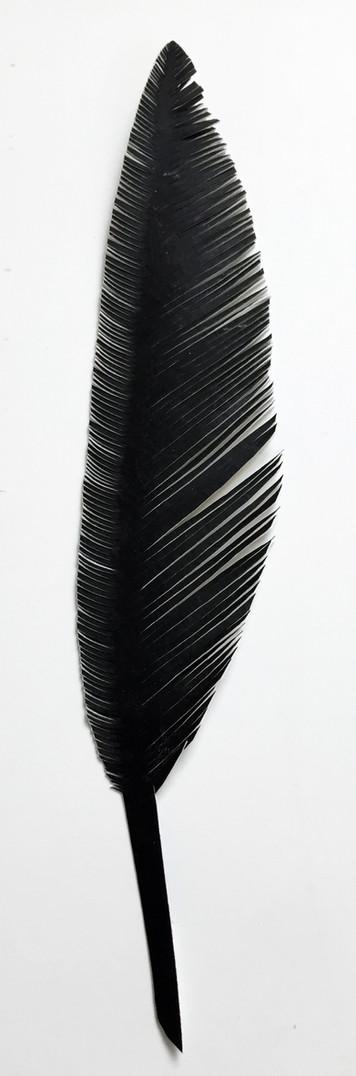 steelink_feather_IMG_6106.jpg