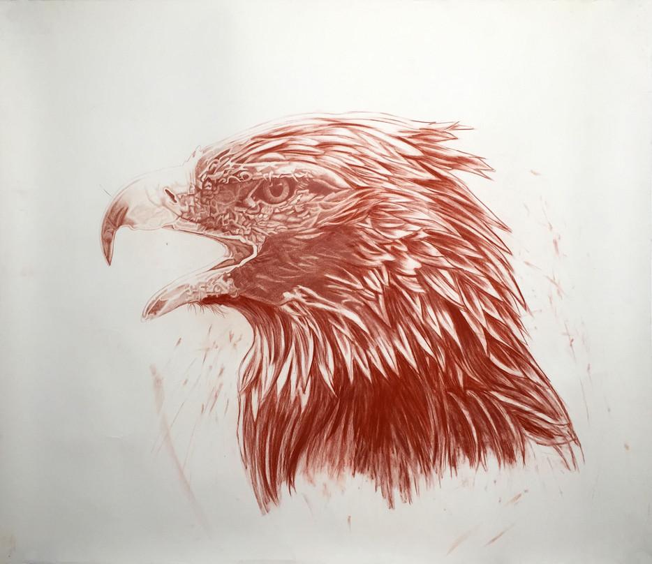 steelink_wild_kingdom_eagle.jpg