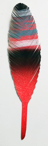 steelink_feather_IMG_6116.jpg