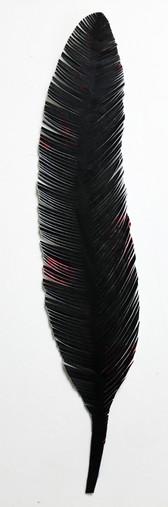 steelink_feather_IMG_6115.jpg