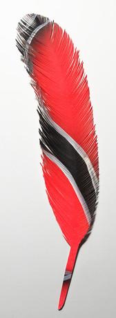 steelink_feather_IMG_5245.jpg