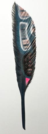 steelink_feather_IMG_5253.jpg