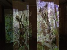 Projection Walk 1.jpg