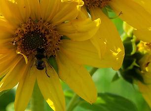 13 Freyas Garden.jpg