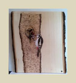 Woodpecker Lunch - Sold