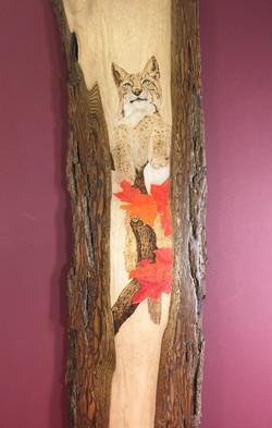 Lynx in Maple Tree