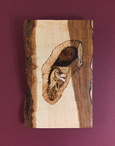 Owl Peeking in Tree Wood Burning Art. Northern Embers Art
