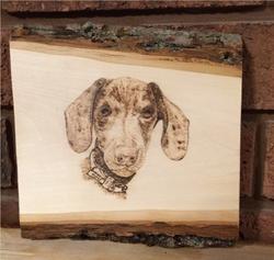 Dobby the Dachsund Puppy