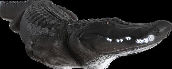 Delta_Alligator_17.png