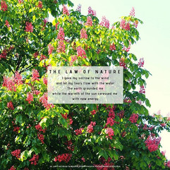 The law of nature _#naturesway #blossom