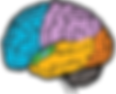 ZPPuvf-brain-parts-hd-image.png