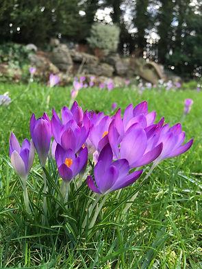 garden services hitchin letchworth baldock stevenage sandy biggleswade harpenden st.albans