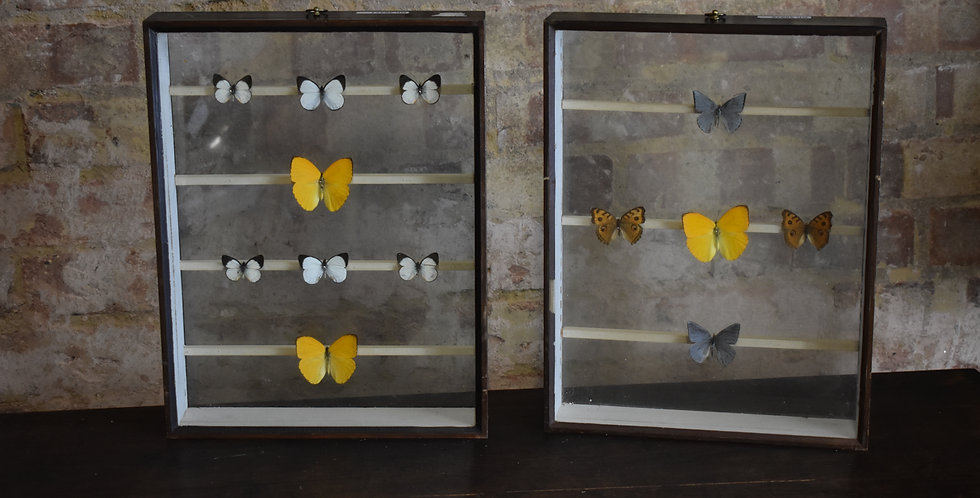 Decorative antiques specimen cabinet drawers butterflies taxidermy