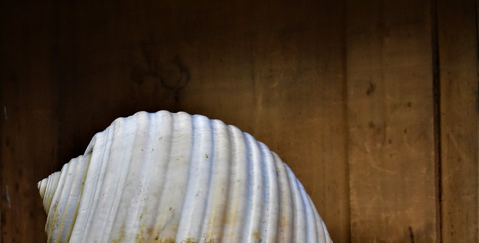 Vintage Shell Interior Styling