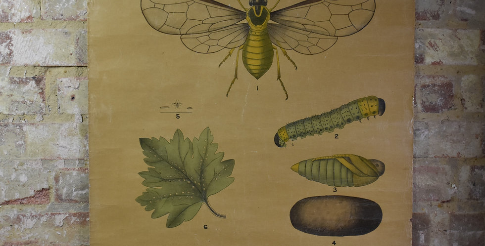 Antique Botanical Poster W & AK Johnston Royal Agricultural Society Wall Hanging