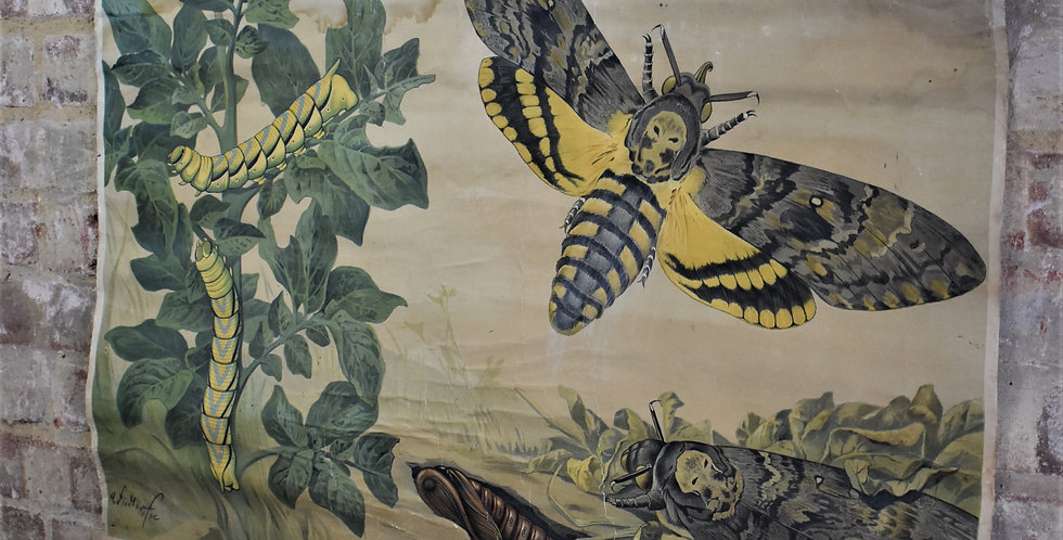 Antique Vintage Moth Poster Wall Art Hanging Lepidopterology School Linen Backed