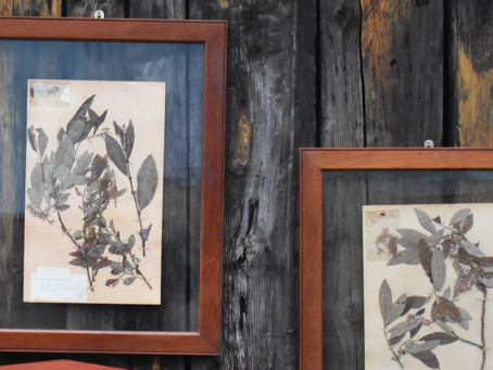 """Using Herbarium Botanical Samples as wall hangings to """"add soul to an interior"""""""