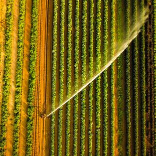 Farm Watermark (Hon. Mention)