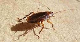 cucarachas.jpg