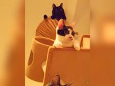 三匹の住人(保護猫)