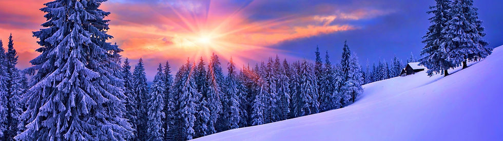 345186-forest-winter-snow-landscape-pine