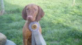 Benz_Puppy_Match_Group_4_04022017-460x25