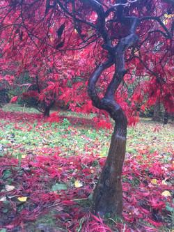 The Cotswolds - arboretum