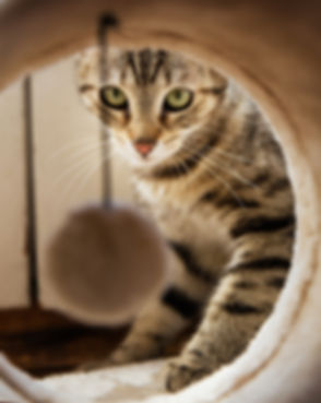 adorable-animal-cat-cute-271611.jpg