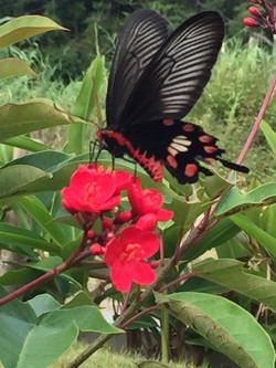 庭には蝶が遊びに